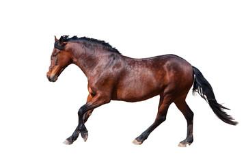 Wall Mural - Bay horse runs forward. Side view.