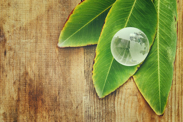Green glass globe and green leafs over wooden table.