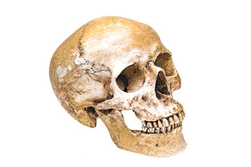 Virtual reality Human skull isolated on white background