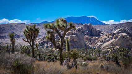 Landscape at Joshua Tree National Park in California's Mojave Desert
