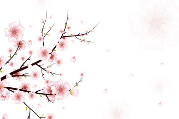 Spring background. Vector illustration of spring bloom branch with pink flowers, buds, petals falling. Realistic design isolated on white background. Blooming cherry tree twig.