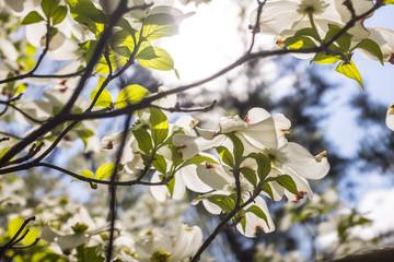 flower trees in New york