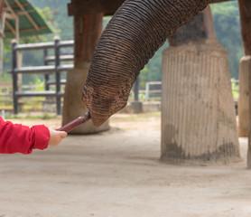 Animal tourism and feeding an elephant
