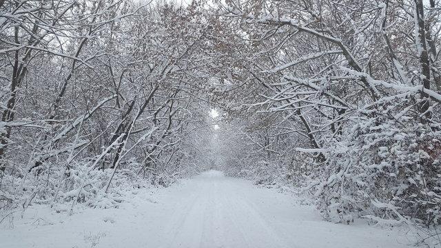 photo winter landscape