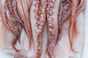 Raw squid close up