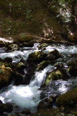 A small mountain stream in the forests in the north of Montenegro.