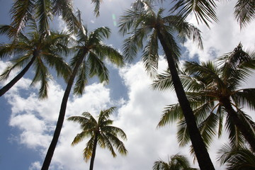 The Arecaceae are a botanical family of perennial climbers, shrubs, acaules and trees commonly known as palm trees
