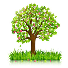 Spring nature background with blooming tree and green grass vector