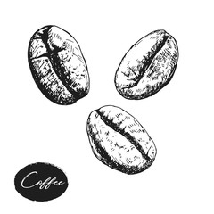 painted coffee beans, sketch, vector drawing, perfect ingredient,