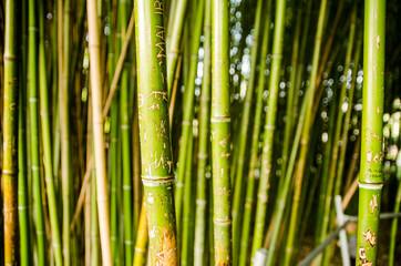 Bamboo forest in Vienna botanic garden