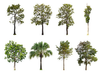Isolated collection of trees on white background