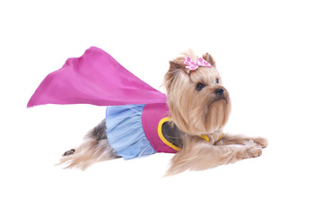Yorkshire Terrier Dog Super Hero