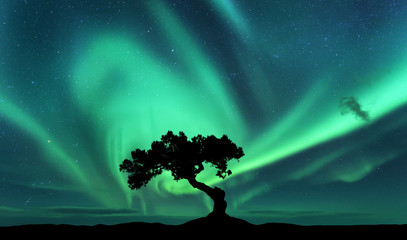 Tuinposter Noorderlicht Aurora borealis and silhouette of a tree on the hill. Aurora. Green northern lights. Sky with stars and polar lights. Night landscape with bright aurora, tree, dark sky. Nature background. Concept
