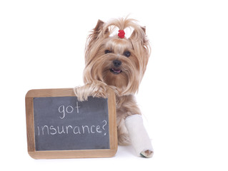 Yorkshire Terrier Holding Sign with Pet Insurance Reminder