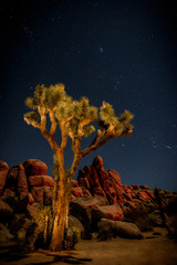 Joshua Tree Nightime