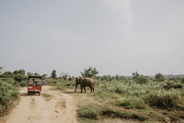 Sri Lankan Safari