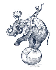 Circus elephant. African Wild animal on the ball. Show at the zoo. Engraved sketch hand drawn in vintage style.