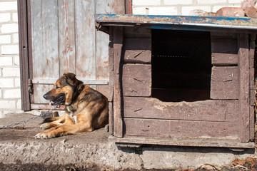 Dog on chain lies near wooden kennel