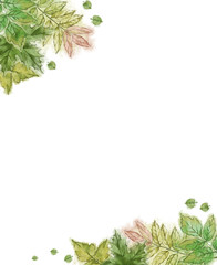 Green Leaf Watercolor Painted Template.  Botanical Illustration in Vintage Style Isolated on White.