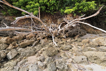 Bunch of dead tree branches among rocks. Punta Ballo beach-Sipalay-Philippines. 0295