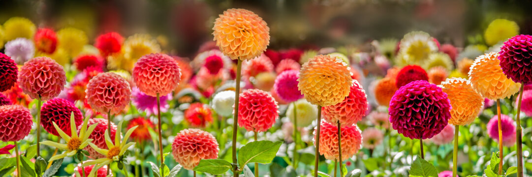 Bursts of Color