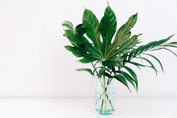 Modern plant in white interior. Clean abstract background