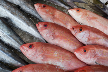 Red fish at the market