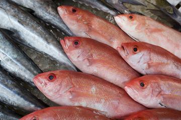 Close-up of fresh fish at fish market