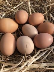 Country Fresh Eggs