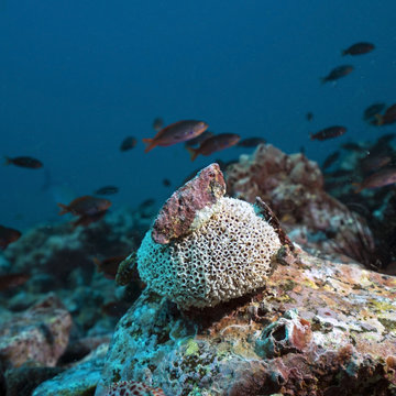 Sponge collecting minerals in remote offshore Malpelo Island, UNESCO World Heritage Site in Colombia