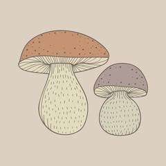 Illustration of mushrooms isolated