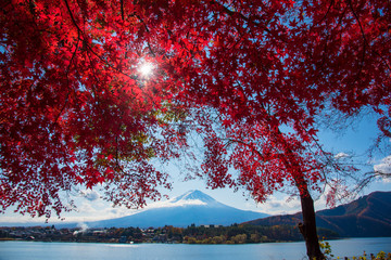 Autumn leaves and Mount Fuij