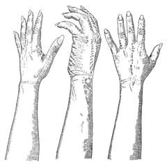 Set of hand drawn hands. Vector.