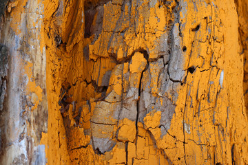 painted yellow wood tree