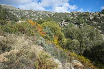 Willow forest in the Callejas stream, in the Sierra de los Porrones, Guadarrama Mountains, El Boalo, Madrid, Spain