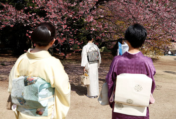 Kimono-clad women look at early flowering Kanzakura cherry blossoms in full bloom at the Shinjuku Gyoen National Garden in Tokyo