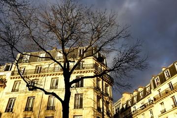 Immeuble de pierre et arbre au coucher du soleil Paris