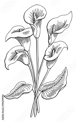 Callas Flower Graphic Black White Isolated Bouquet Sketch Ilration Vector