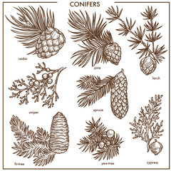 Natural conifers small branches isolated monochrome illustrations set