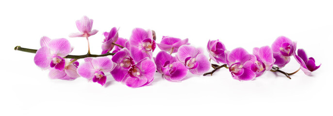 Spoed Foto op Canvas Orchidee orchid isolated on white
