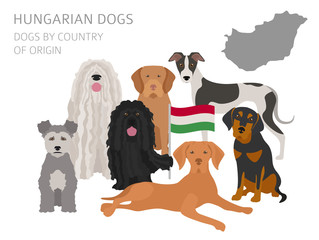 Dogs by country of origin. Hungarian dog breeds. Infographic template