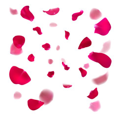 Pink rose petals are falling down. Cherry or Apple blossom. Vector illustration. Springtime design.