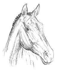 Horse portrait-7
