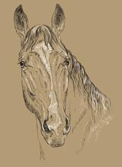 Horse portrait-5 on brown background