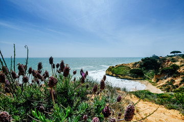 Landscape with Cliff and Dunes at the Beach near Albufeira Portugal in Summer