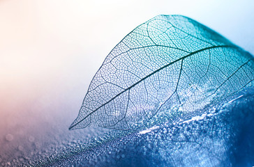 La pose en embrasure Macro photographie Transparent skeleton leaf with beautiful texture on a blue and pink background, glass with shiny water drops close-up macro . Bright expressive artistic image nature, free space.