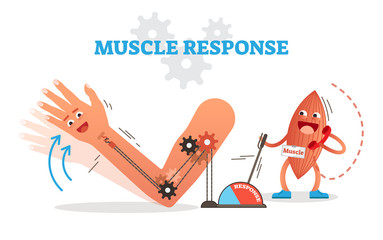 Muscle response conceptual vector illustration scheme with cartoon muscle character receiving nerve impulse and moving hand.