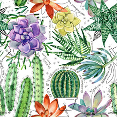 watercolor succulent seamless pattern