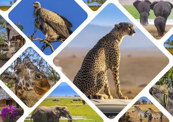 Africa. Safari in Africa. Wild animals. Kenya. Collage of wild animals living in Africa. Travel to Kenya.
