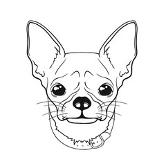 Vector face of dog chihuahua. Line version. Black and white colors. Sketch style. Can be used for coloring books.